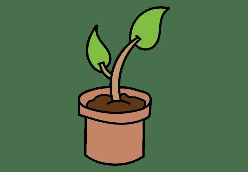 zeyco-verde